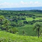 Coffee_Farm_near_Ibiraci_town