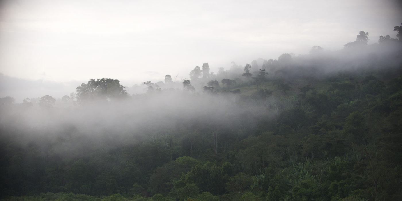 Dimtu Plantation – Ефіопія