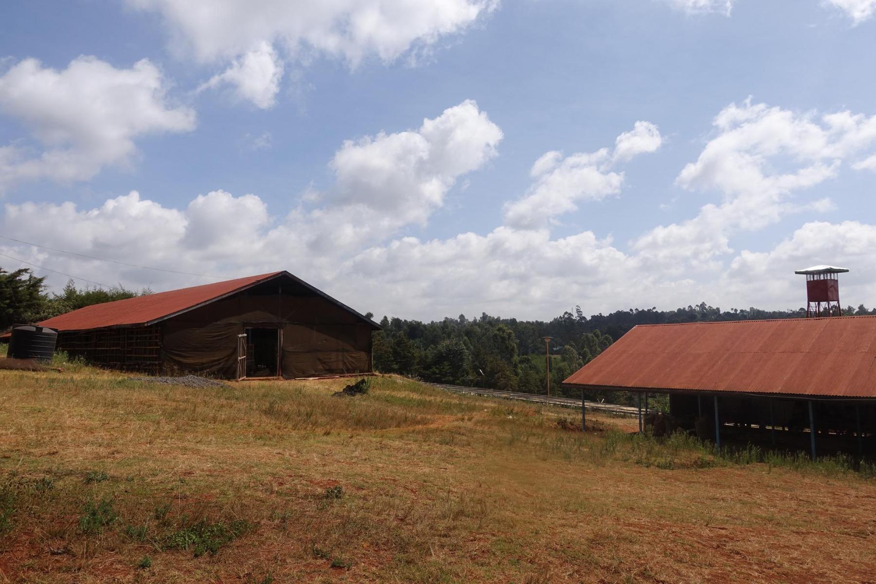 Kiriaini – Кенія