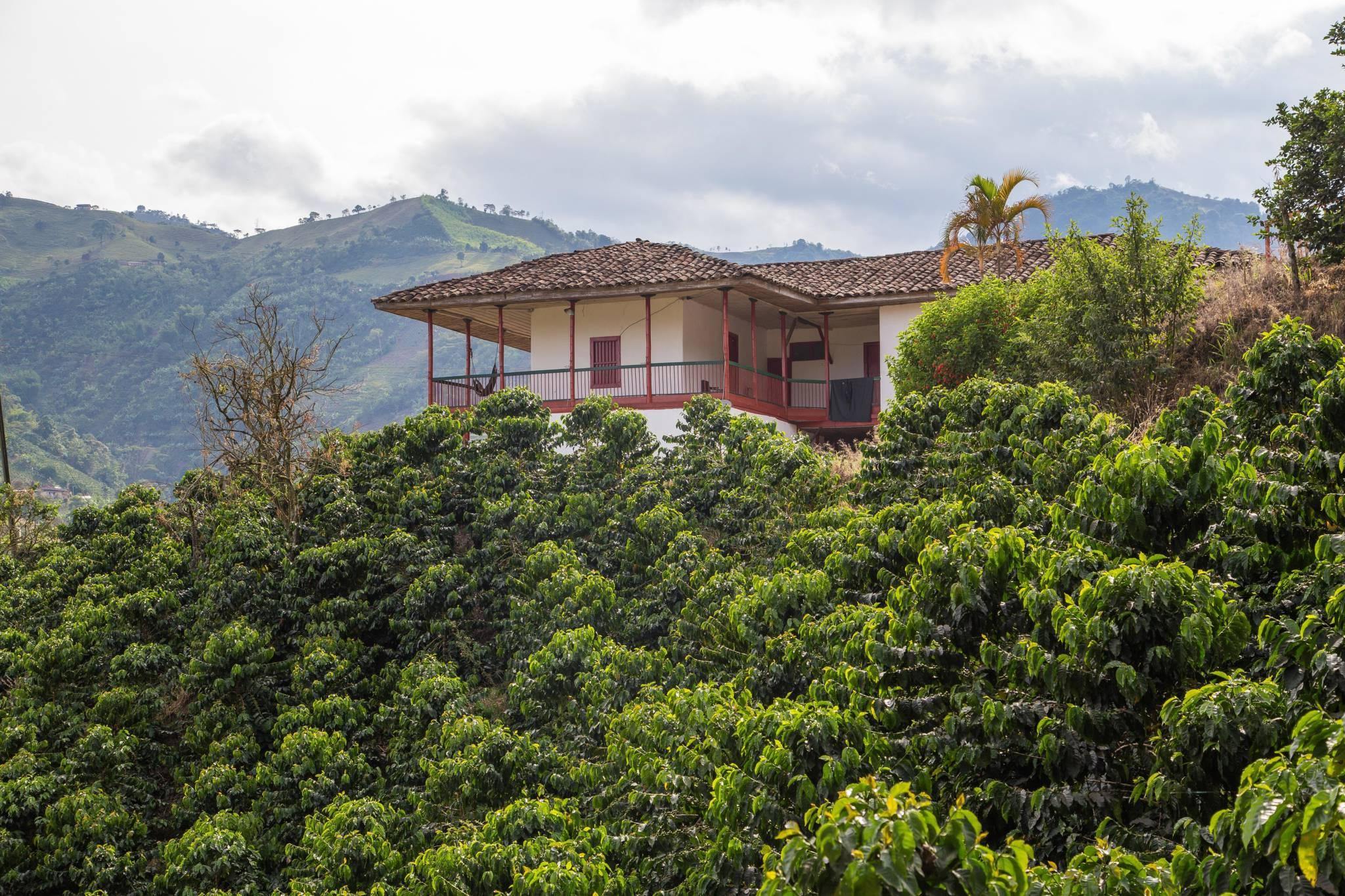Finca Casagrande – Колумбія