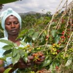 Female-coffee-farmer-in-Rwanda-1000x600