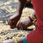 ETHIOPIA_NanochalaCoop_hands_Limu-e1490703599431