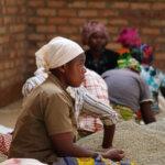 Sorting coffee at Musasas drymill